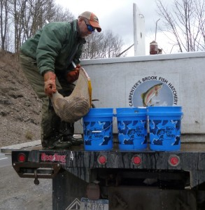 Eric from Carpenter's Fish Hatchery placing fish in buckets to be distributed into a local stream